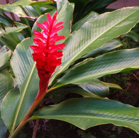Paki Maui Resort: Many plants and flowers on the hotel grounds