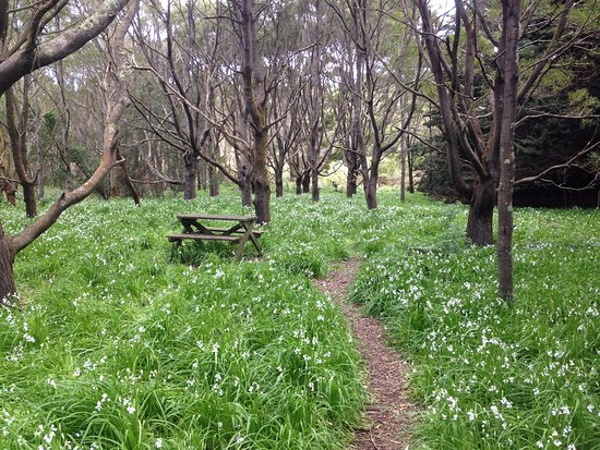 Stanley, Australien: Picnic stop on the walk around the top of The Nut