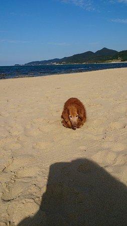 Kyotango, Japón: 犬も歩けます