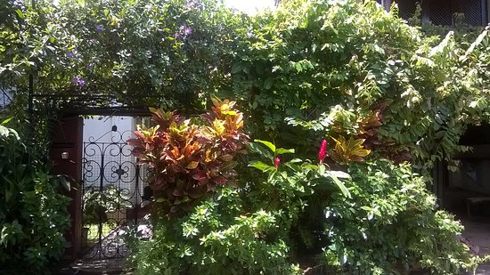Mrs Padmini Nanayakkara's Chelsea Gardens: entrance with wild tropical foliage, ever green