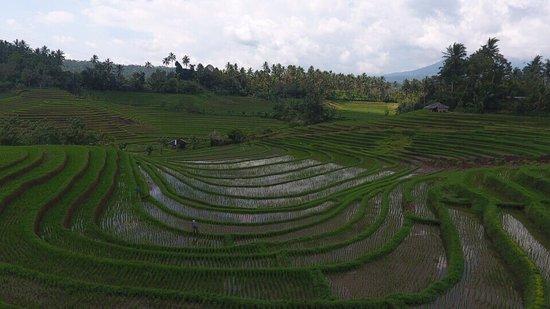Bali Erlebnis Tour