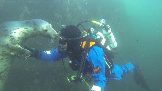Deep blue pirates dive centre - Deep blue dive centre ...
