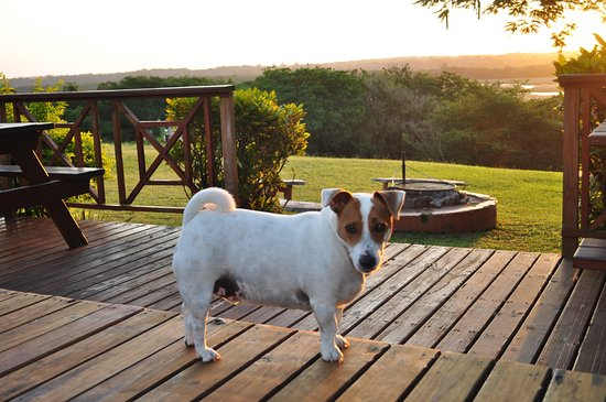Sunset Lodge: Ben our resident Jack Russell