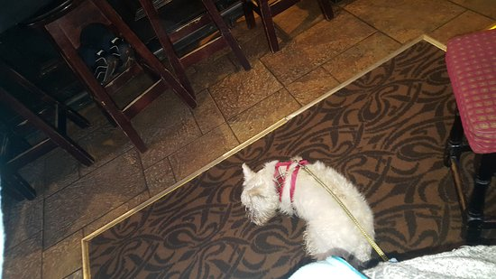 Dog Friendly Restaurants Balloch