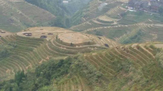 Long Sheng's Dragon Spine Rice Terraces: 20161016_143226_large.jpg