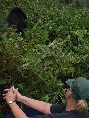 Volcanoes National Park: Tracking Hirwa group in VNP,Kinigi
