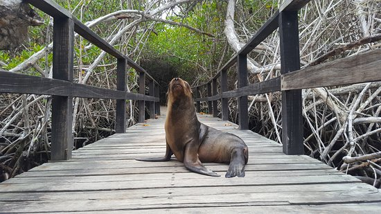 Puerto Villamil, Ecuador: Camino a Concha de Perla, ellos te dan la bienvenida