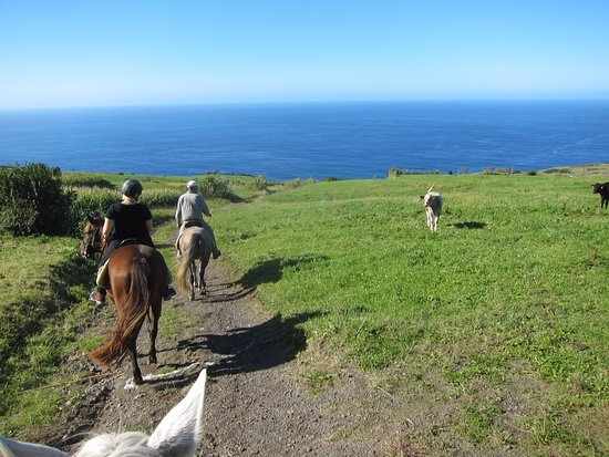 Cedros, Portugal: Riding around, you encounter the cows of Faial.