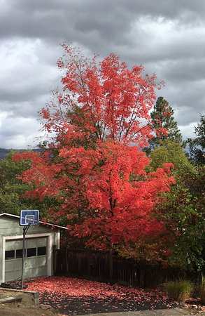 Chanticleer Inn B&B: Several of these photos are views from our bedroom windows.  One photo is from the little steam