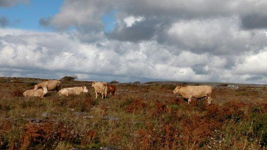 Corofin, Ιρλανδία: img_20161016_140450466-resized-1280_large.jpg