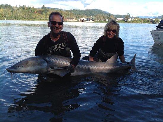 Mission, Canadá: 180 Lb Sturgeon Fraser River 2016