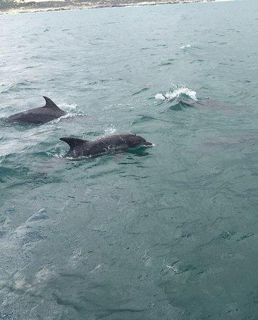 Ivanhoe Sea Safaris: Great day with Ivanhoe safaris