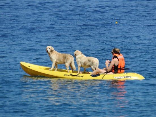 Majahuitas, Mexiko: Kayaking with Champ and Luna