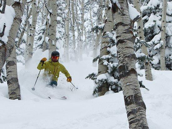 พาร์คซิตี, ยูทาห์: Skiing Powder in Aspen Grove