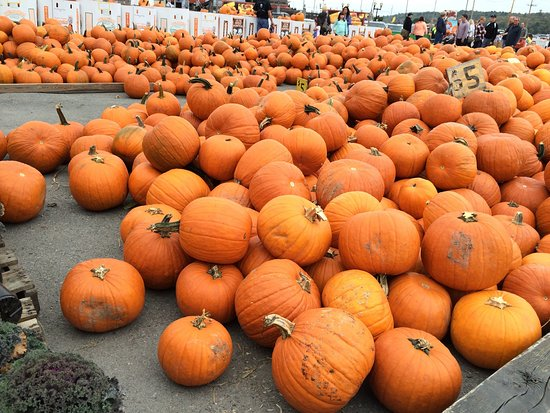 Lehighton, PA: Fall time fun