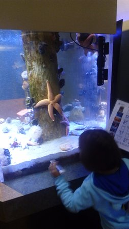 Rye, NH: My daughter checking out the star fish