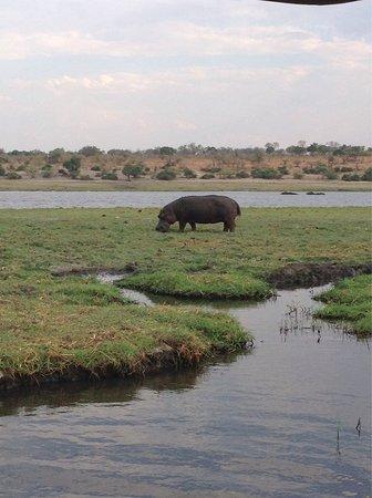 Kasane, Botswana: photo6.jpg
