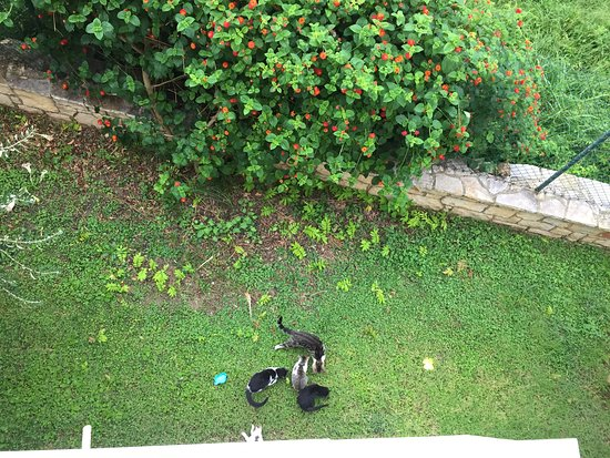 My husband fed the hotel cats, please feed them