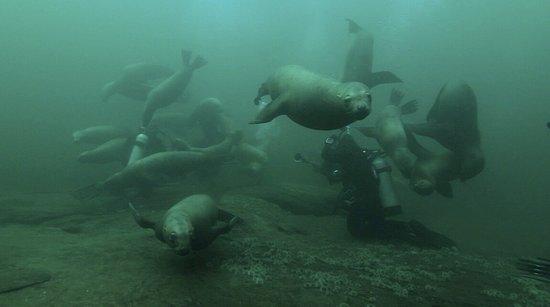 Hornby Island, Canada: photo1.jpg