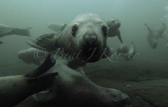 Hornby Island, Canada: photo2.jpg