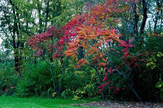 Libertyville, IL: Fall Foliage