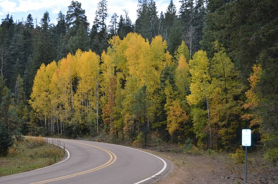 Fall Colors on the way to Greer, AZ