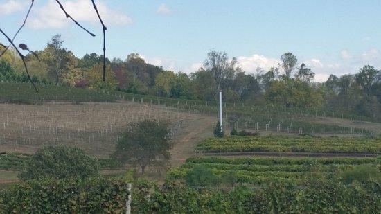 Young Harris, GA: Vineyard view