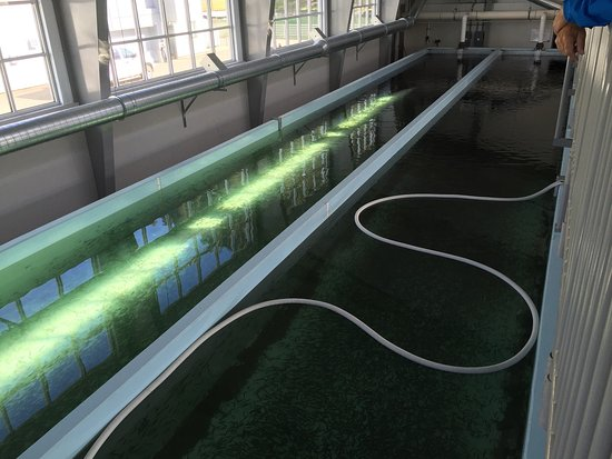 DIPAC's Macaulay Salmon Hatchery : photo2.jpg