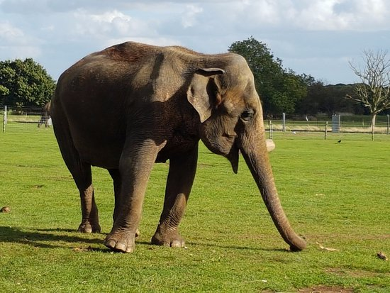 Dunstable, UK: Elephant