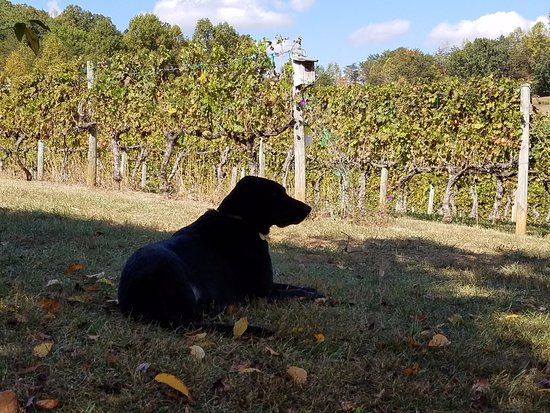 Young Harris, GA: Be sure to say hi to Crash - the 3-legged dog!