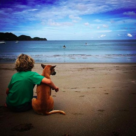 Dreams Las Mareas Costa Rica Beach Dog
