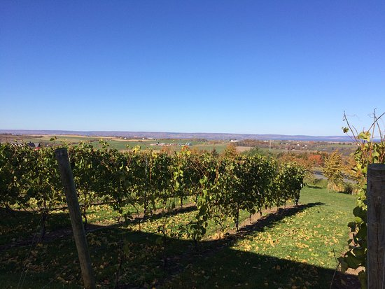 Wolfville, Canada : As you eat you get a picturesque view of the valley and the vineyards