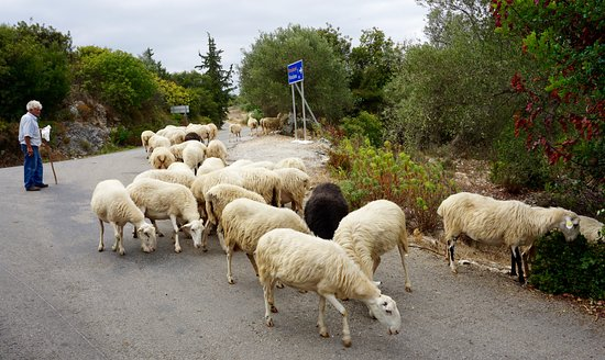 Douliana, Greece: Traffic jam in the village!
