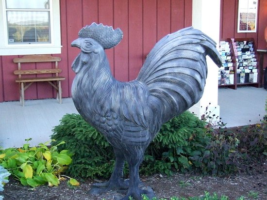 Penn Yan, NY: wanted to ride the rooster