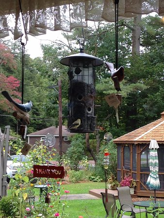 Bear Creek, Pensylwania: View of bird feeder from our table.