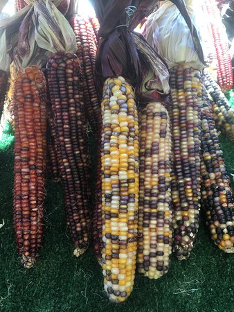 Endicott, Nowy Jork: Native corn
