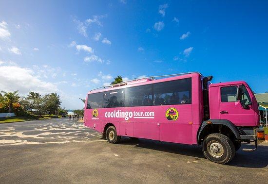 Cool Dingo Tours Tripadvisor