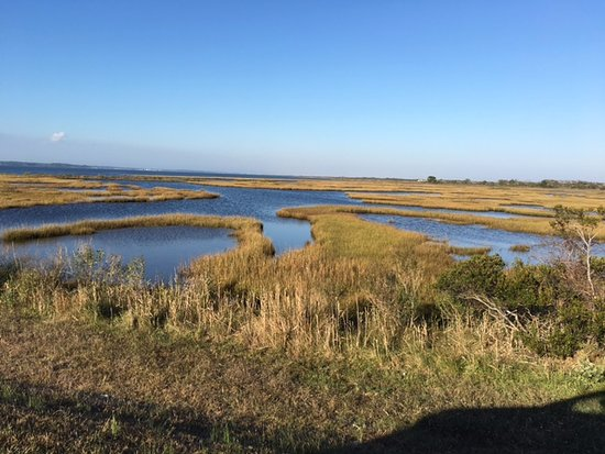 Assateague Island National Seashore: Wetlands