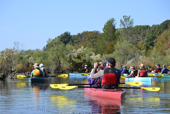 Mallows bay kayak tour lead by atlantic kayak for for 13600 king charles terrace ft washington md