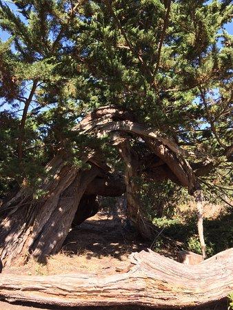 Moss Landing, Californien: photo6.jpg
