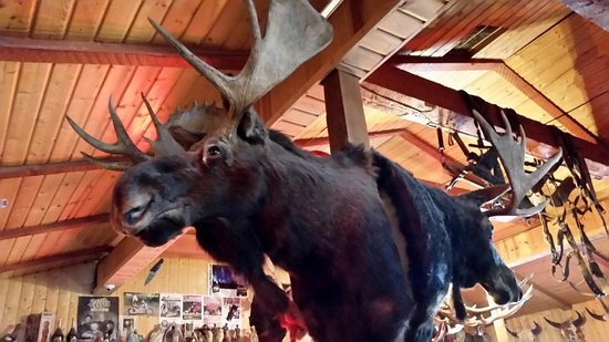 Alpine, WY: Moose Mount Near Rafters