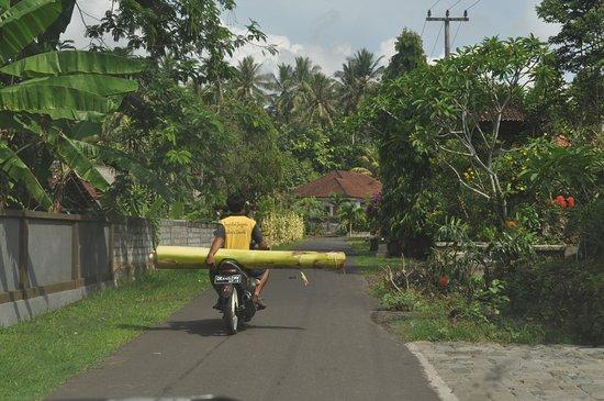 Jembrana, Indonesia: Desa Palasari
