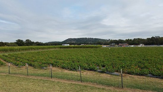 Marble Falls, TX: pick your own flower field
