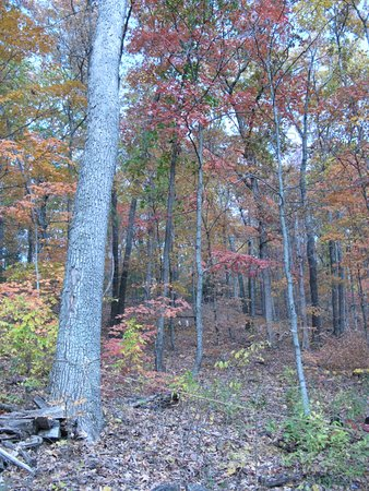 Marthasville, MO: Colorful trees (2003 photo)