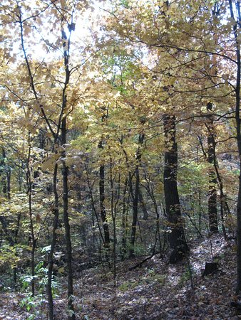 Marthasville, MO: More colorful trees (2003)