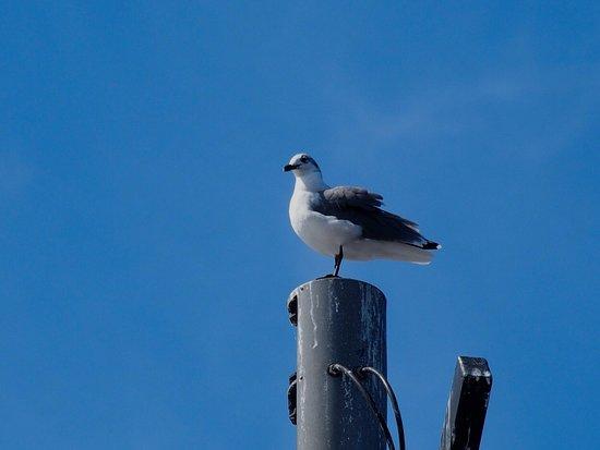 Southport, Carolina del Norte: photo5.jpg