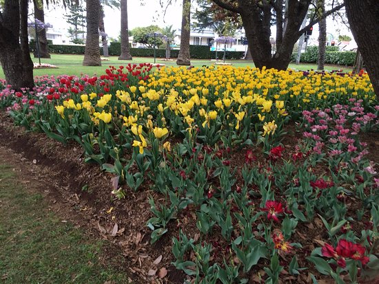 Laurel Bank Park: Some of the tulips.
