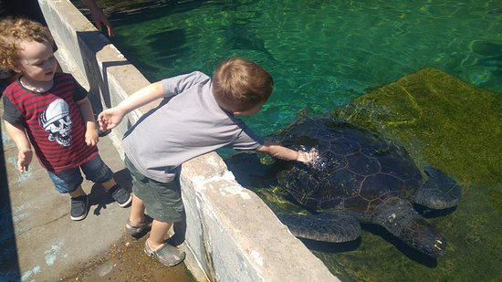 Urangan, Australia: Giving the turtle a good back rub