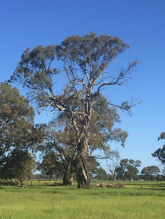 Coonawarra, Australia: photo1.jpg