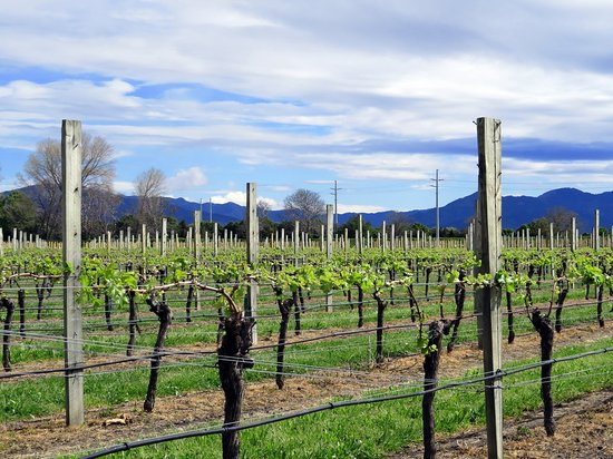 Blenheim, Neuseeland: Perfect Day in Marlborough